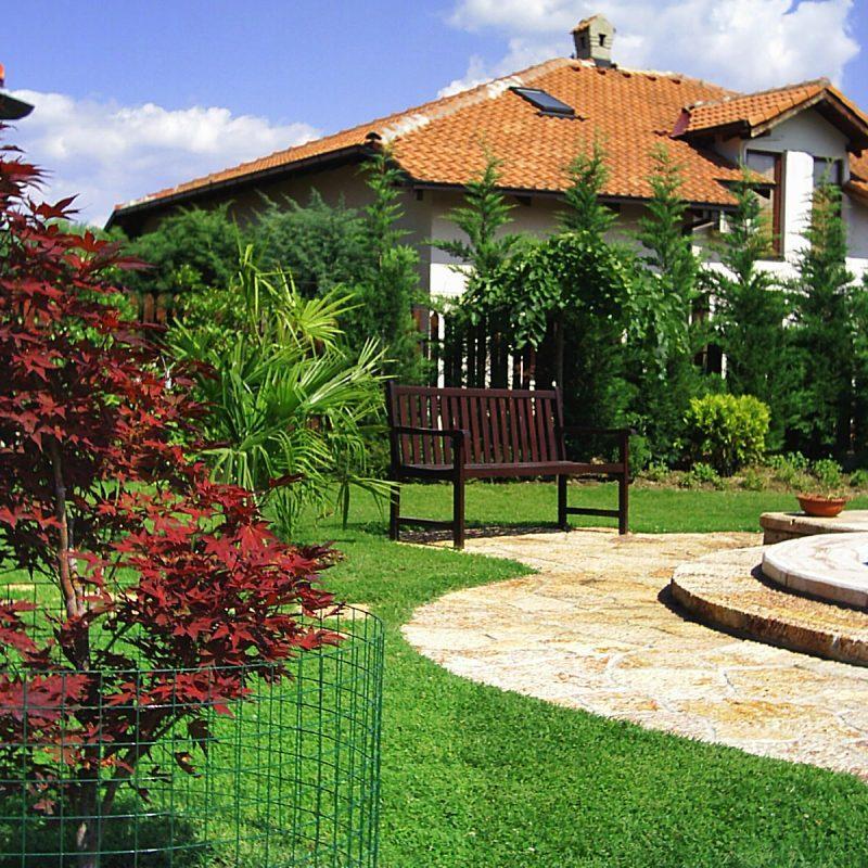 Убав и уреден двор, Дрвја, Acer palmatum
