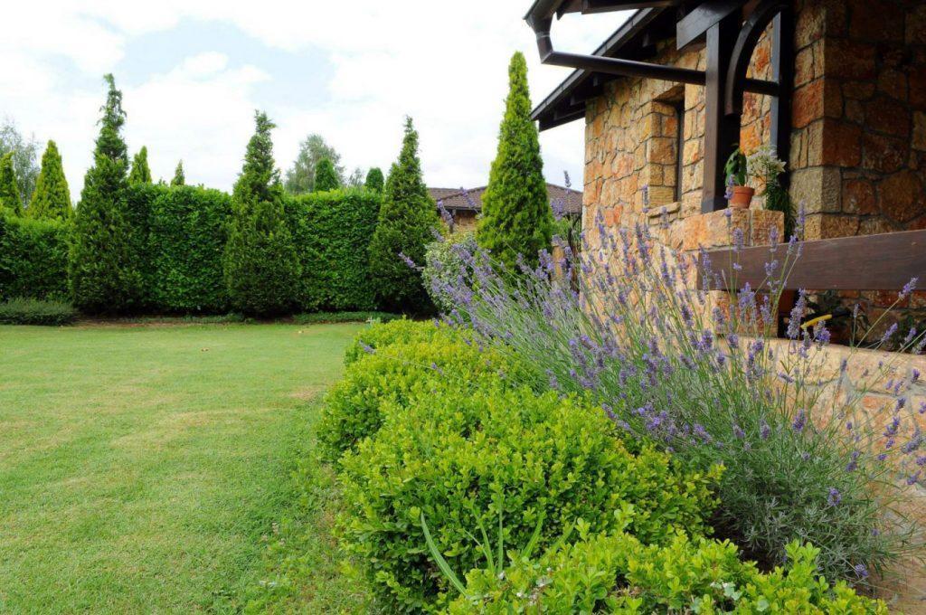 Убав и уреден двор, лаванда.